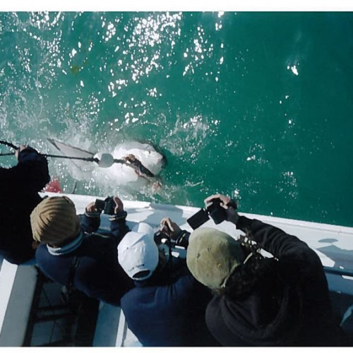 Cape Town, Shark Dive