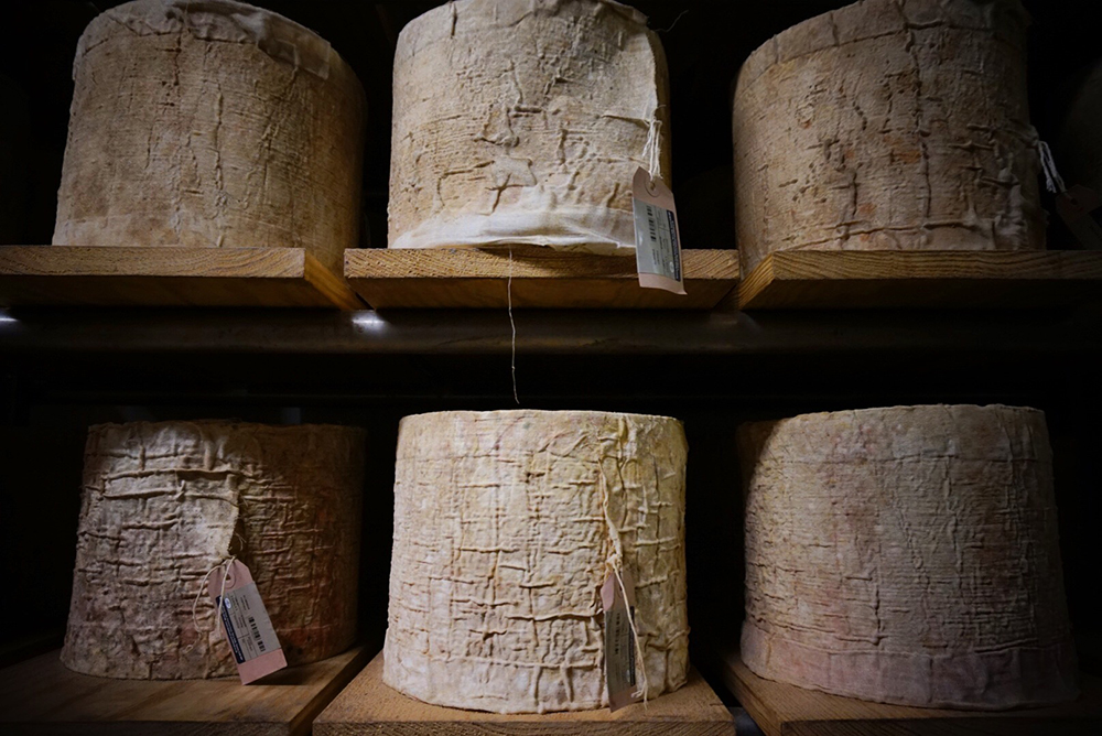 bodnant cheese north wales